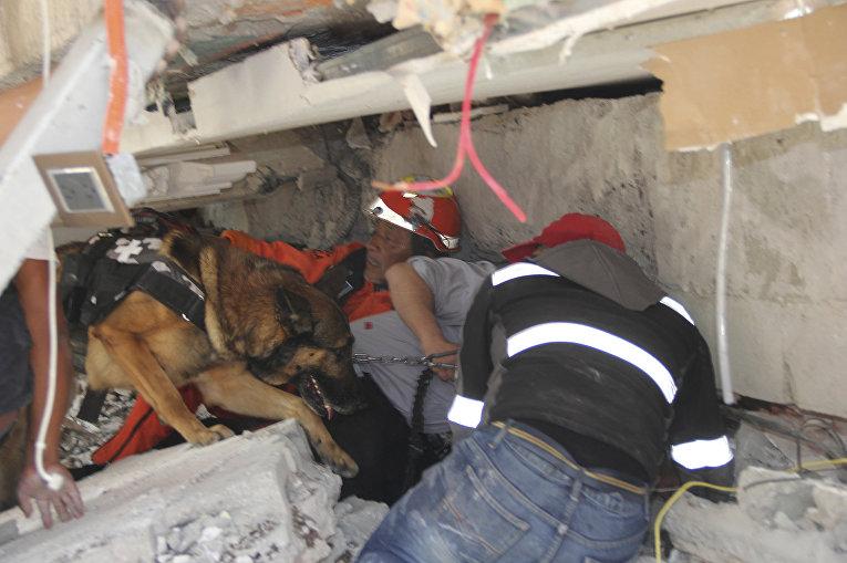 Спасатели и обученная собака ищут детей под завалами рухнувшей школы Энрике Ребсамена