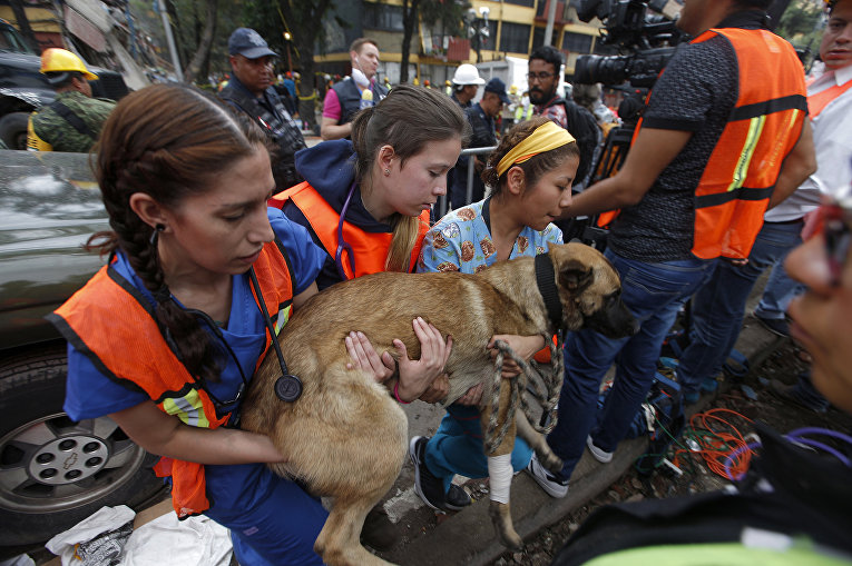 Волонтеры помогают восстановиться собаке-спасателю