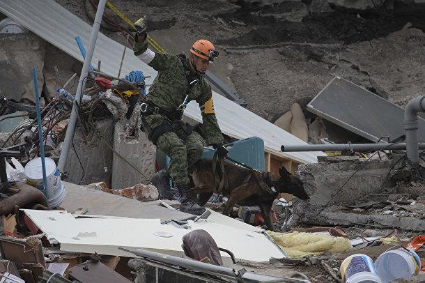 Мексиканский спасатель и поисковая собака возобновляют свою работу на месте рухнувшего офисного здания в районе Рома Норте