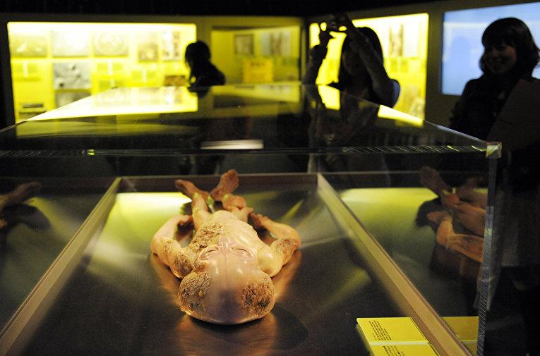 Макет пришельца в Национальном музее новых наук и инноваций в Токио