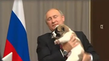 Верный сбежал от Путина