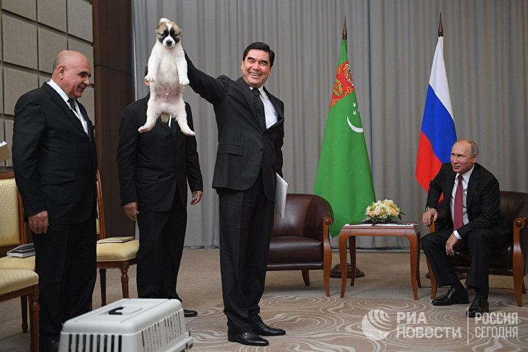Президент Туркмении, председатель кабинета министров Туркмении Гурбангулы Бердымухамедов с щенком породы алабай. 11 октября 2017