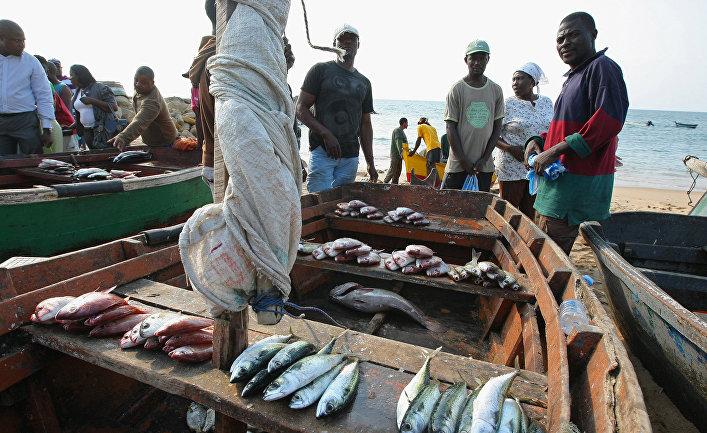 Торговля рыбой на берегу океана в городе Луанда