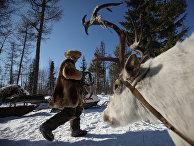 Последние кочевники-оленеводы из рода Сычегир