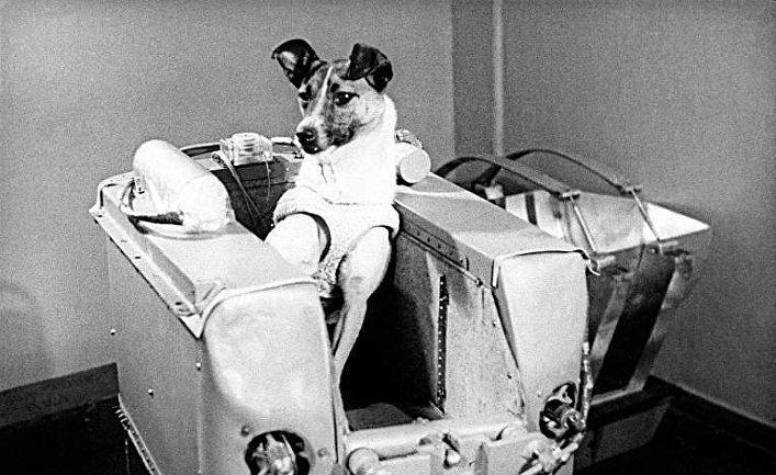 Исполнилось 60 лет содня полета собаки Лайки вкосмос