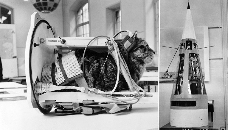 Фелисетт — первая кошка, побывавшая в космическом пространстве