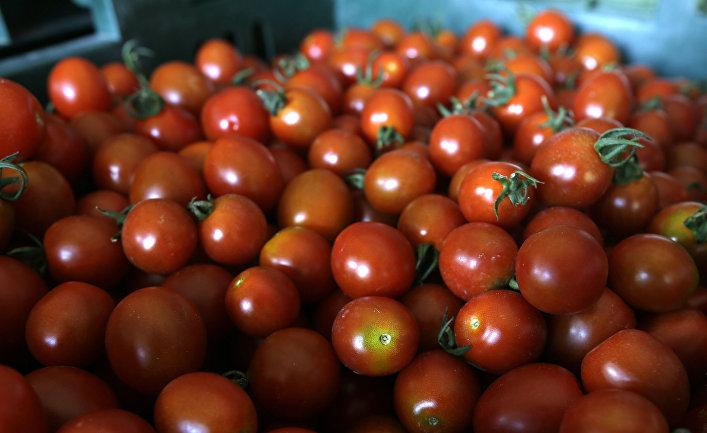 Первая партия турецких томатов отправлена изИзмира вПетербург