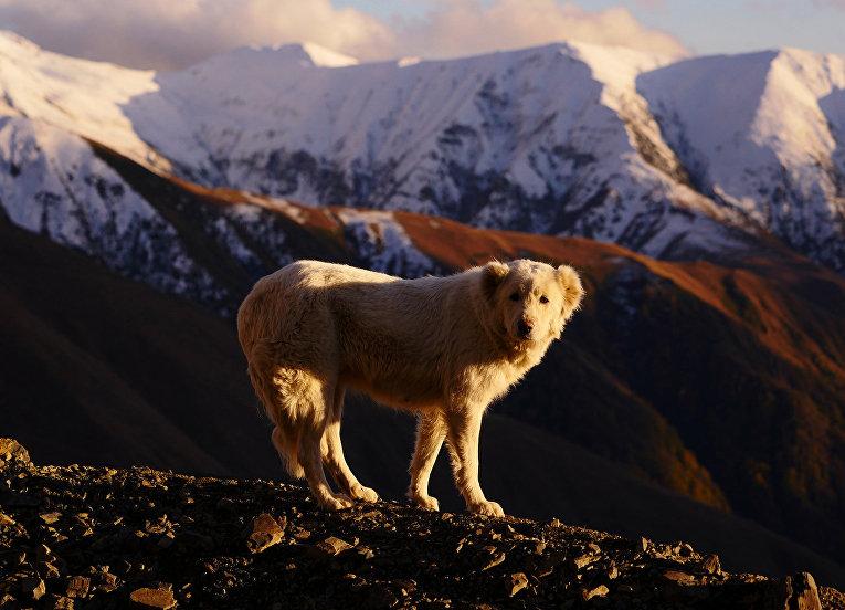 Пастухи гор Тушетии