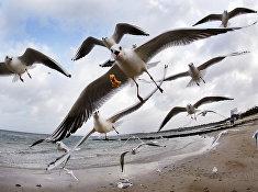 Чайки на берегу Балтийского моря в Тиммендорфер-Штранде, Германия