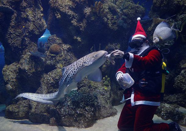 «Подводный» Санта на Мальте