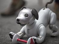 Робот Aibo новейшего поколения в Лас-Вегасе