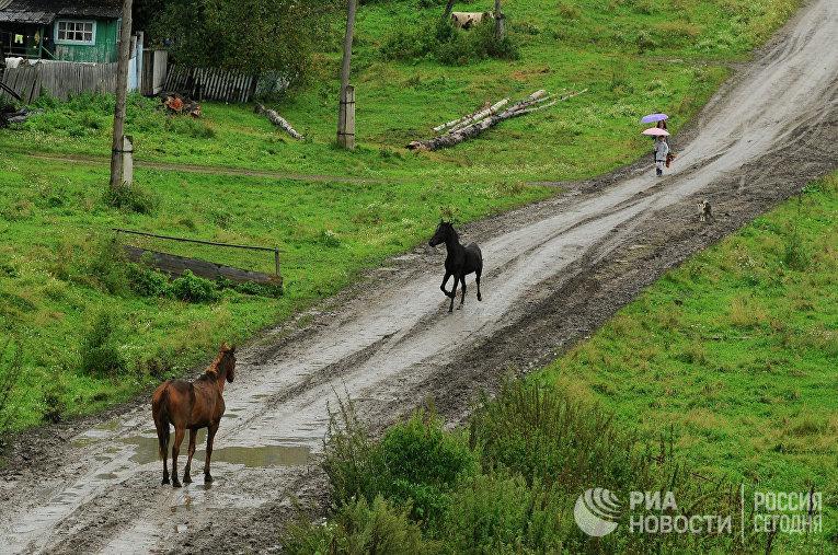 Лошади на деревенской дороге