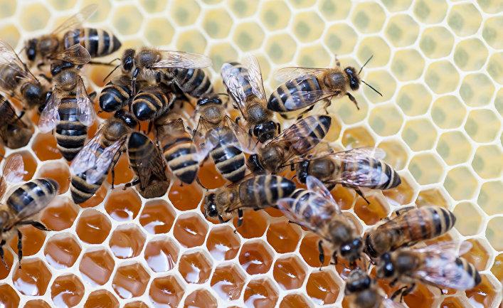 Украина израсходовала годовую квоту напоставку мёда вЕС за10 дней