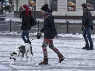 Собака играет со снежком в Вильнюсе, Литва
