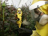 Работники удобряют растения на ферме в Боготе